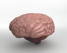 Human Brain 3D model cerebra