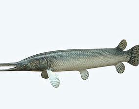 Aligator Gar Fish 3D model