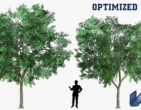 3D asset Prosopis Cineraria Tree Optimized