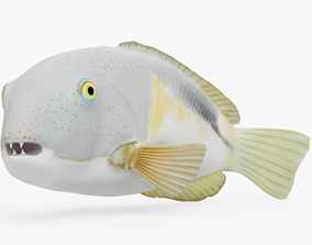 3D model Orange Dotted Tuskfish