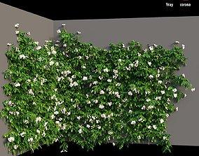 Rose plant set 37 3D
