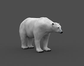 Polarbear 3d model