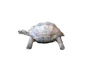 3D Tortoise Rigged