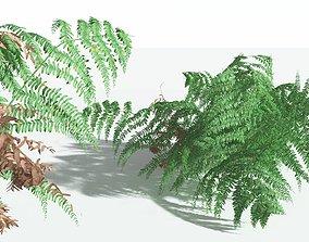 EVERYPlant Common Bracken 03 --21 Models--