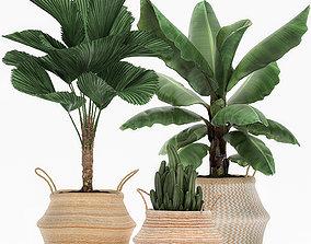 Decorative plants in flower 3D model 5