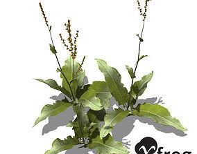 XfrogPlants Garden Sorrel 3D model