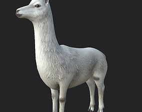 Alpaca 3D model game-ready