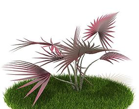 Purple Needle Fanned Plant 3D