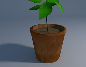 3D model Cute little plant