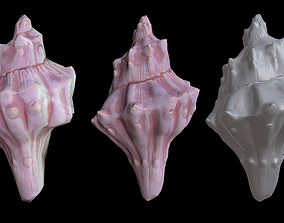 3D asset game-ready Sea Shell- hand painted