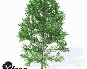 Xfrog Plants European Aspen 1 3D model