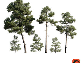 3D Pinus Brutia -Turkish Pines bundle - Corona