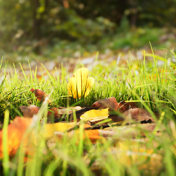 UE4 Broadleaf Undergrowth: Real-Time Tilia Scene