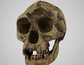 3D printable model Homo Floresiensis skull