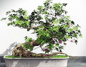 bonsai plant 3D