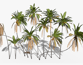 3D PBR Coconut Palm Trees Asset 2