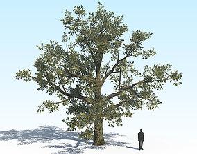 Oak Tree 04 PBR 3D model