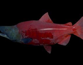 3D model Sockeye Salmon