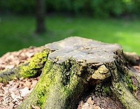 3D model Moss covered tree stump