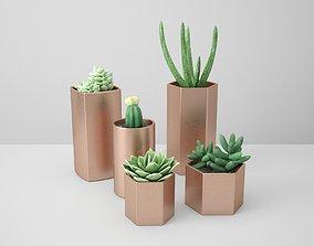 Copper Potted Cactus Set 3D model