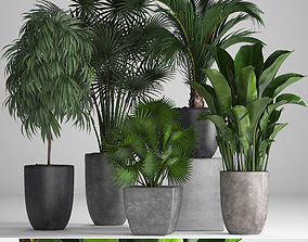 Collection of exotic plants in pots 3D model