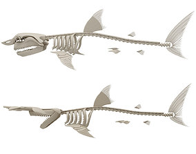 3D Sharks Skeletons