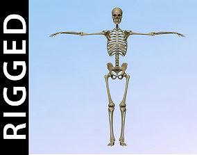 3D asset Skeleton Rig