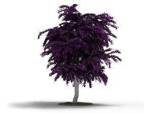 Purple Leafy Tree With Grey Trunk 3D model