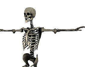 3D model animated SKELETON