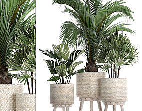 3D Collection of exotic plants in white pots 427