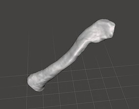 clavicula Human left collarbone - male 3D