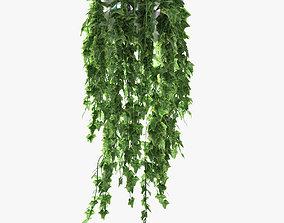 ivy in pot 06 3D