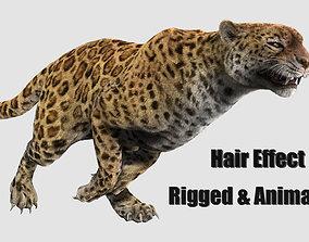 3D asset animated leopard panther puma jaguar