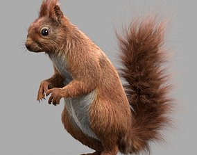 Squirrel Red 3D model