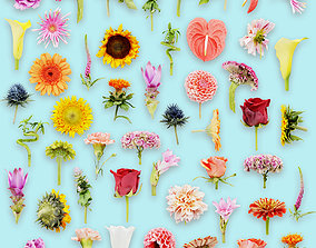 3D model 25 Flower Collection