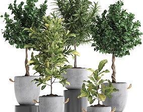 3D Collection of Exotic Plants trees 437