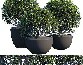 3D Plant in pots 01