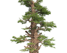 Western Juniper Tree 3D model