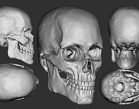3D European Male Skull