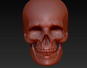 3D print model Skull anatomy