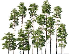 3D Pinus sylvestris Mega Collection 12 models H10-27m