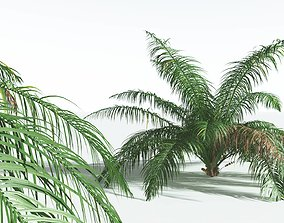 3D EVERYPlant Seashore Palm 04 --14 Models--