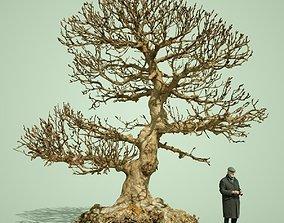 Dead Bonsai Tree 1 3D