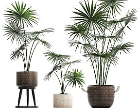 Collection of palm trees for the interior 429 3D model