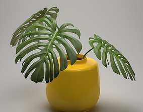 3D model leaf Monstera Plant