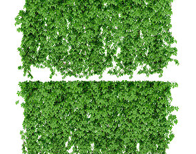 The wall of a parthenocissus 2 items v2 3D