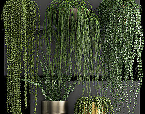 3D Vertical gardening on wall shelves 61