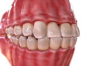 3D asset Human Teeth