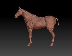 HORSE stallion 3D model