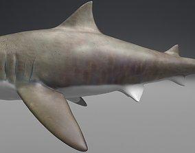 game-ready Shark 3D model
